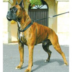 Harnais pour empêcher le chien de tirer Sympa Dog T2