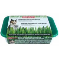 Herbe à chat dépurative naturelle Zolux