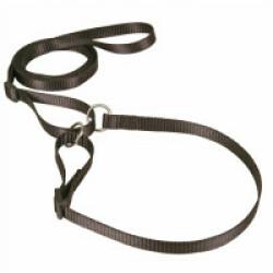 Laisse collier nylon noire réglable pour chien