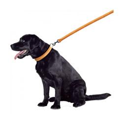 Laisse chien cuir bombé Noire