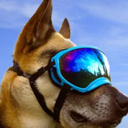 Lunette masque oculaire thérapeutique pour chien Rex-Specs K9