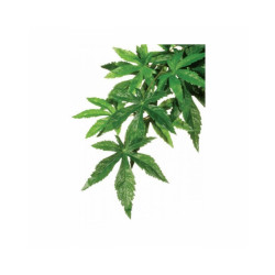 Plante Abutilon Exo Terra pour terrarium