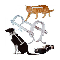 Carcan antitorsion protection automutilation chien chat Propal T0