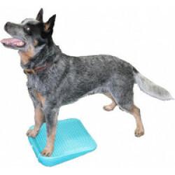 Rampe d'équilibre gonflable pour chien FitPaws The Ramp - coloris bleu